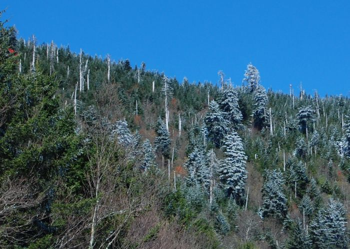Here is a brief exert from a local website about Grandfather Mountain ...