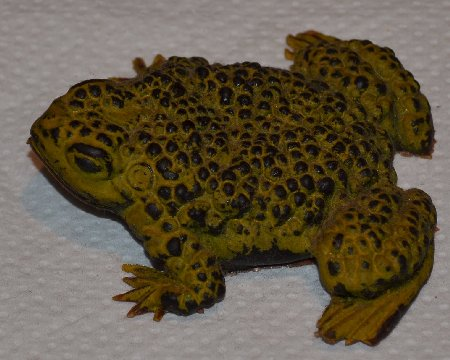 Frog Collection - Toad with bumpy skin