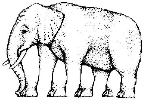 Ilusiones ópticas, Paradojas, Percepción de las imágenes