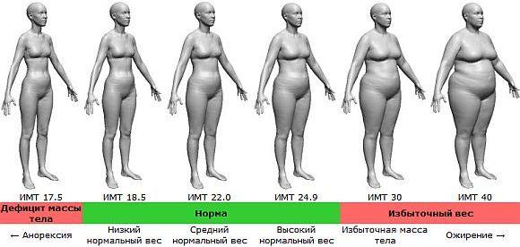 жир на животе у женщин