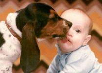 Dog licking