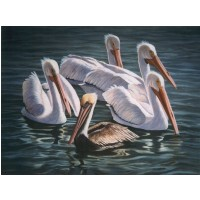 Pelicans - Painting by Clementina Rivera