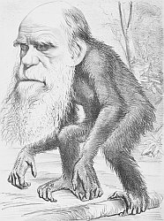 evolution and creationism opposing views of the scientific  darwin cartoon