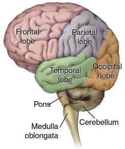 The Mind - The distinction between the physical brain and ...