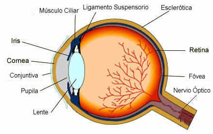 Los cinco sentidos del cuerpo humano - visión, audición, gusto ...